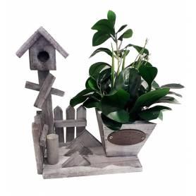 Plante  maison de fleur