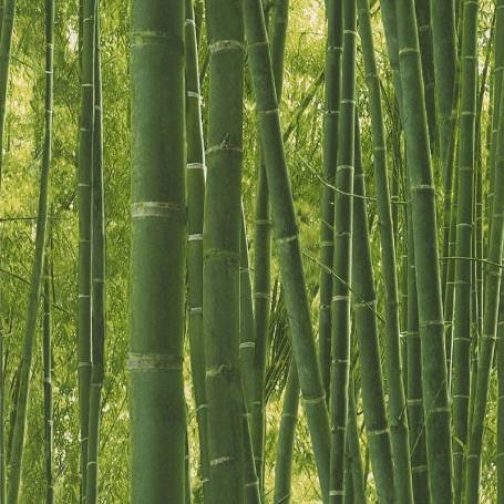 Papier peint Bambous - Reality 3 Réf 51124704